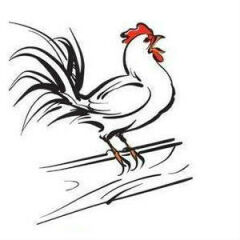 Poultry N More
